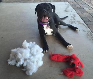 Exploded Toy